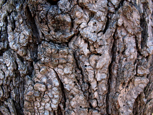 Tree Bark: 10 Free, High Res Textures