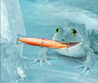1 47 Chú Ếch Bắc Cực trong Photoshop