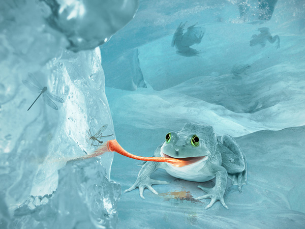 Create a Fictional Arctic Snow Frog in Photoshop
