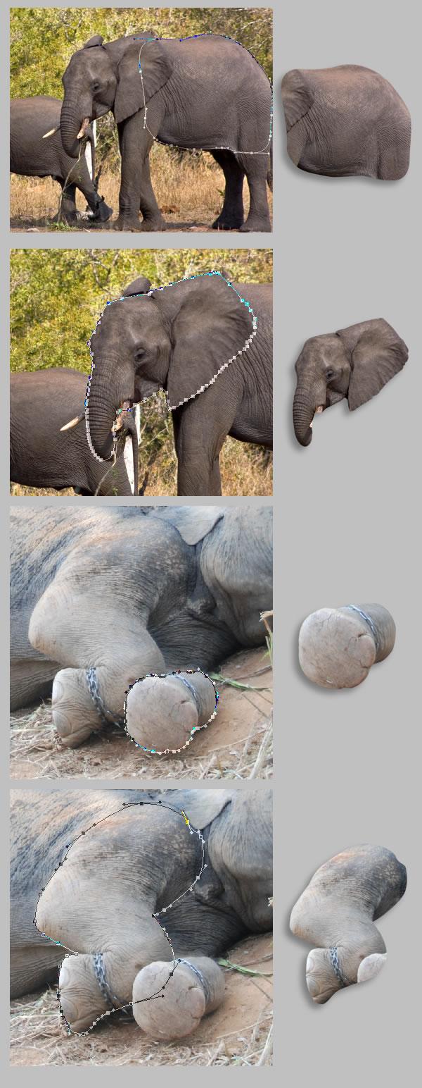 elephant 10 Tạo Một Ly Kem Hình Chú Voi trong Photoshop