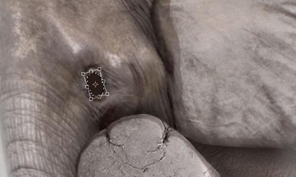 elephant 43c Tạo Một Ly Kem Hình Chú Voi trong Photoshop